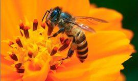 con ong