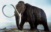 Giải mã giấc mơ thấy voi- Mơ thấy voi có ý nghĩa gì?