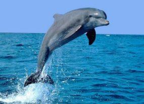 Mơ thấy cá heo có điềm báo gì? đánh số nào?